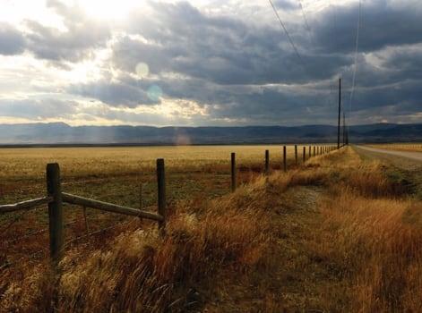 Montana Field