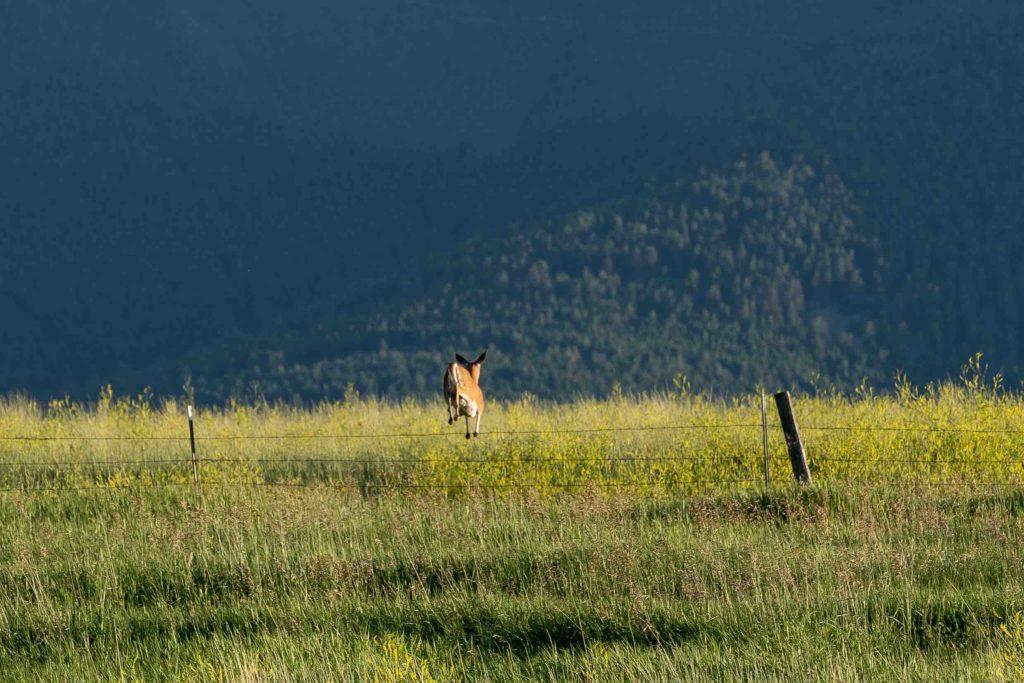 TBD Fleshman Creek - wildlife