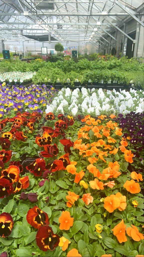 flowers at cashman nursery