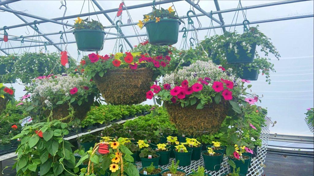 hanging baskets of flowers at oak gardens
